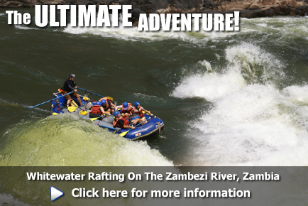 Whitewater Rafting on the Zambezi River, click here for more information